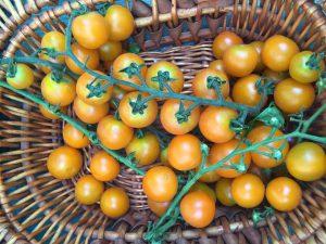 limoni_mercato_contadino_castelli_romani