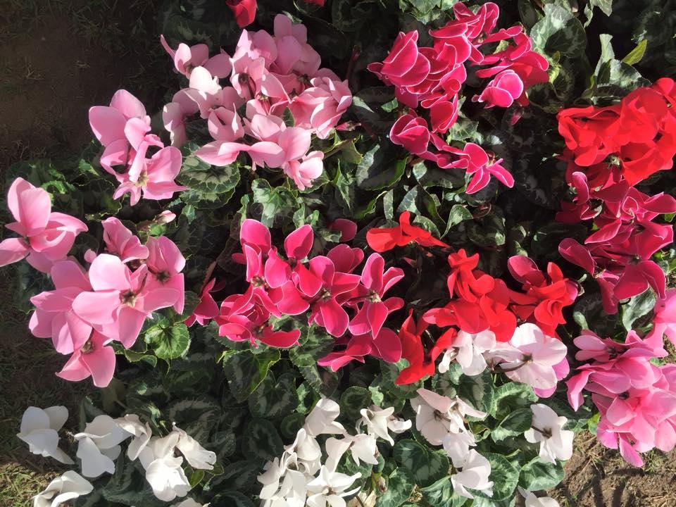 fiori_mercato_contadino