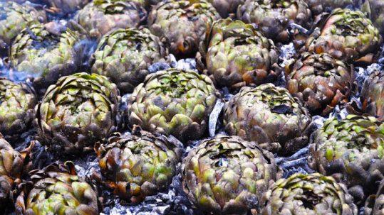 carciofi alla matticella tour mercato contadino